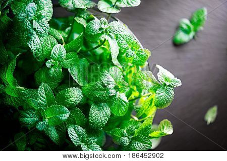 Mint. Bunch of Fresh green organic mint leaf on slate table closeup. Peppermint border on natural black stone background