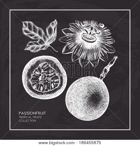 Dark purple passion fruit hand drawn illustration. Engraved botanical sketch. Vintage Passiflora design