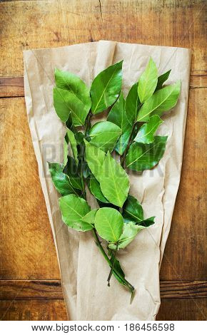 Branch of laurel bay leaves on wrapping paper