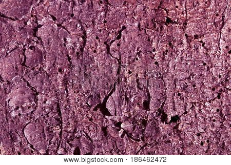 Purple Toned Pine Tree Bark Pattern.