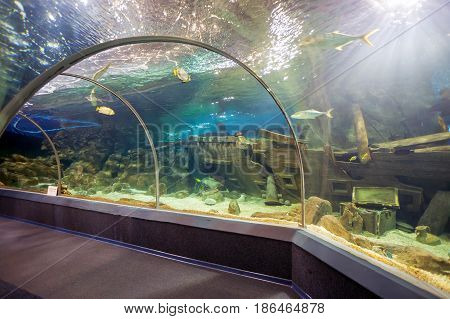 Sochi, Russia - February 11, 2016: Sochi Discovery World Aquarium - one of the main attractions of Adler, the biggest aquarium on the southern coast of Russia