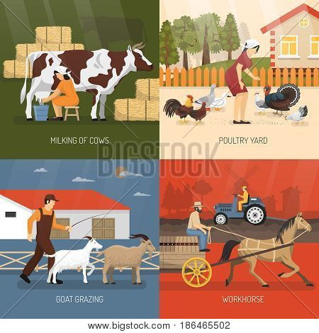 Farm animals design concept with four square icon set and milking of cows poultry yard goat grazing and workhouse descriptions vector illustration