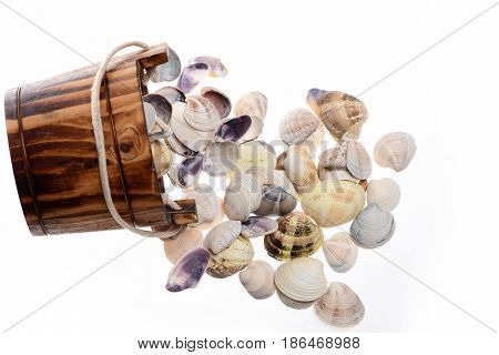 Bucket With Conch Shells Isolated