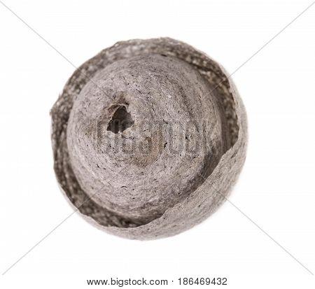 Wasp nest on white. Grey round nest of tree wasp (Dolichovespula sylvestris) isolated on white background