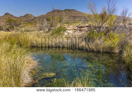 Desert Spring In Ash Meadows National Wildlife Refuge, Nevada