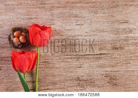 Red tulip with bird nest on brown vintage background. Top view text space