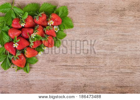 Strawberries with leaves background with text space