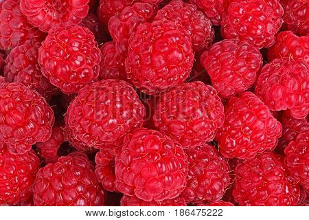 Numerous ripe fruit of red raspberries (Rubus idaeus) fill the frame