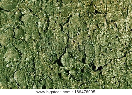 Green Toned Pine Tree Bark Pattern.