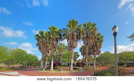 Circle of cabbage palm trees (Sabal palmetto) in the Henry C. Chambers Waterfront Park off of Bay Street in downtown Beaufort South Carolina