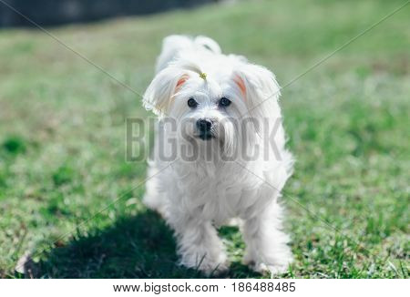 Happy cute dog walking in green grass