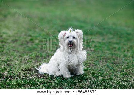 Happy cute dog sitting in green grass
