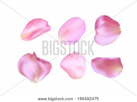 Pink rose petals set isolated on white background. Realistic vector illustration