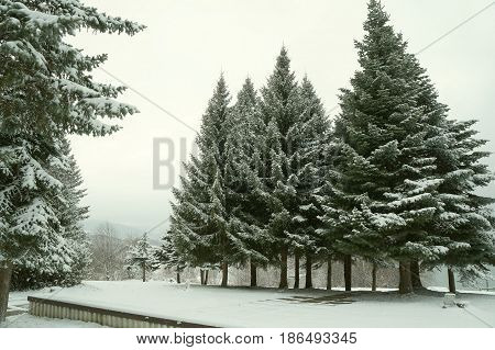 Winter evening twilight near Mavrovo lake in Macedonian republic, dark fir trees