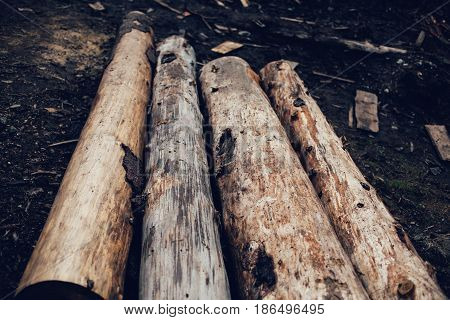 Pile of cut pine logs in the forest. On the ground