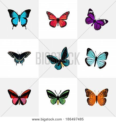 Realistic Butterfly, Danaus Plexippus, Morpho Hecuba And Other Vector Elements. Set Of Moth Realistic Symbols Also Includes Red, Blue, Monarch Objects.