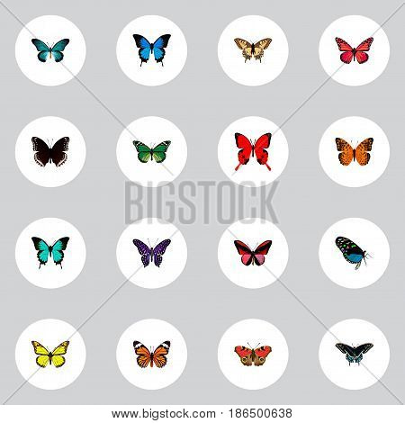 Realistic Common Blue, Danaus Plexippus, Monarch And Other Vector Elements. Set Of Moth Realistic Symbols Also Includes Brown, Monarch, Green Objects.