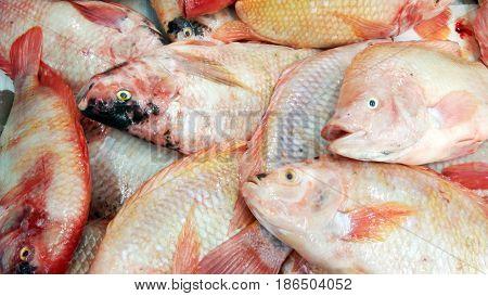 fresh nile tilapia, fresh sea food .