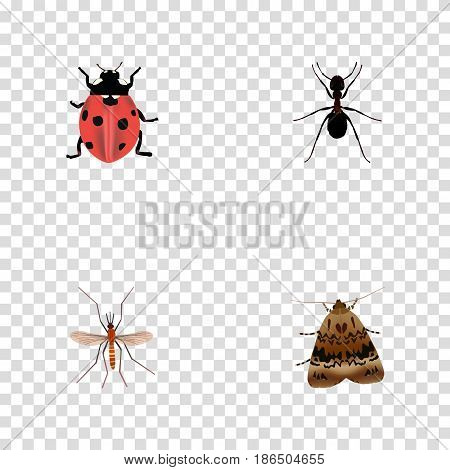 Realistic Ladybird, Butterfly, Gnat And Other Vector Elements. Set Of Animal Realistic Symbols Also Includes Emmet, Pismire, Ladybird Objects.