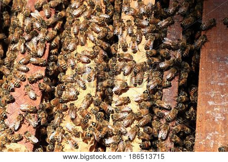 Bees return to the hives during the harvest. Lot of bees fly near a number of beehives. Bees in flight.