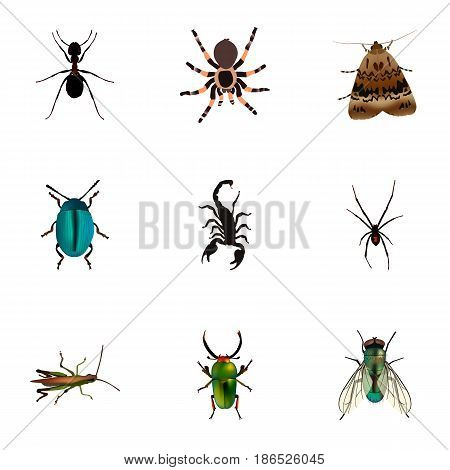 Realistic Ant, Butterfly, Insect And Other Vector Elements. Set Of Animal Realistic Symbols Also Includes Locust, Arachnid, Butterfly Objects.