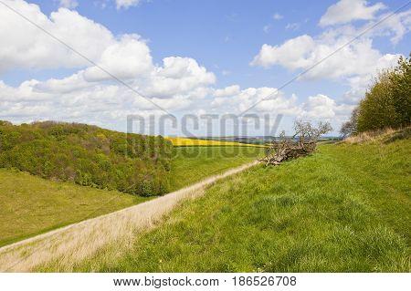 Scenic Springtime Landscape