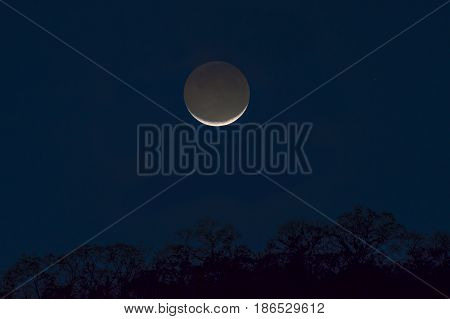 Beautiful detail of crescent moon in deep blue twilight with silhouettes of trees below