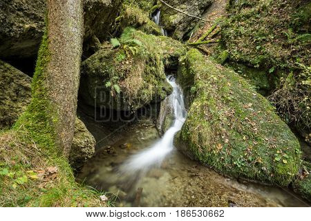 Little waterfall flows through a fairy tale mossy forest in the Allgau Alps.