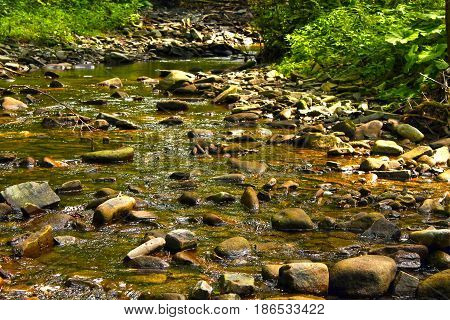 A shallow stream of water in the forest