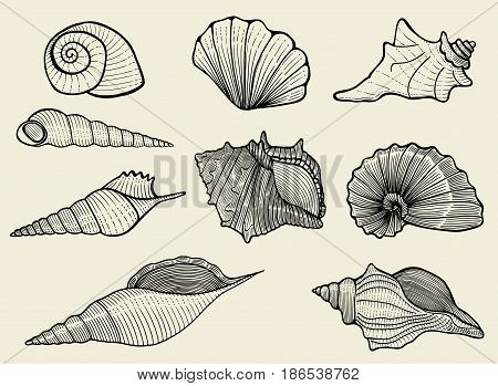 Vector illustration with different seashells on beige background