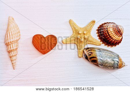Encrypted I love sea tagline made of sea shells and star fish