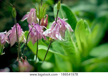 Flower bells in meadow, flowers bells close-up