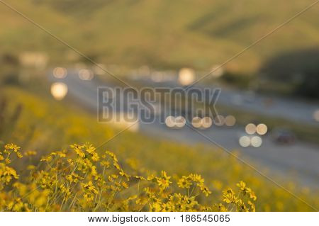 cars traveling on highway with wildflowers in foreground in focus