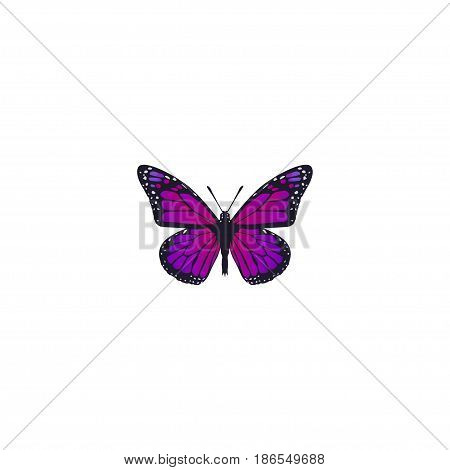 Realistic Violet Wing Element. Vector Illustration Of Realistic Purple Monarch  Isolated On Clean Background. Can Be Used As Violet, Butterfly And Purple Symbols.