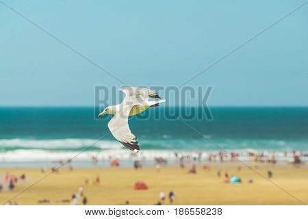 Seagull flying high over a beach with the sea in the background. Colour enhancement exposure and soft focus used for effect.