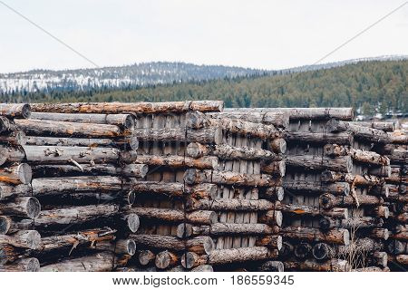 Preparation and storage of solid pieces of wood for construction on a sawmill in the forests of the taiga Russia. Concept storage for the winter tree.