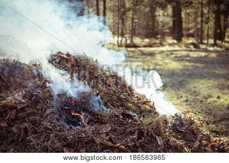 Bonfire. Dry Autumn  Leaves Burning With Lots Of Smoke