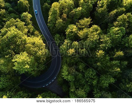 street between large trees from top with drone aerial view, landscape, green