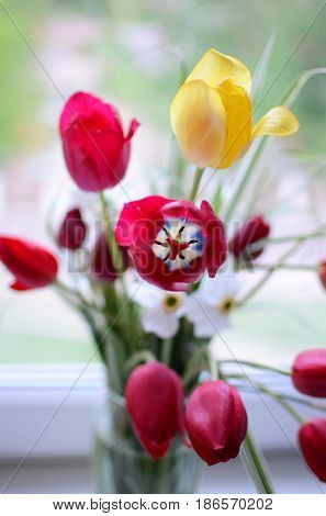 bright blured bouquet of spring red and yellow tulips at a window, springtime concept
