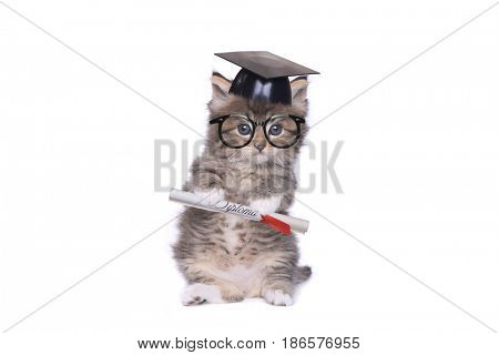 Adorable Tiny 4 Week Old Kitten Graduating With Diploma