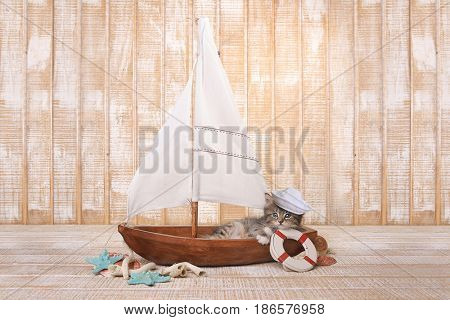 Little Cute Kitten in a Sailboat With Ocean Theme