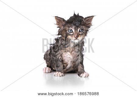 Adorable Dripping Wet Kitten on White