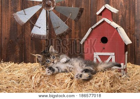 Adorable Kitten in a Barn Setting With Straw