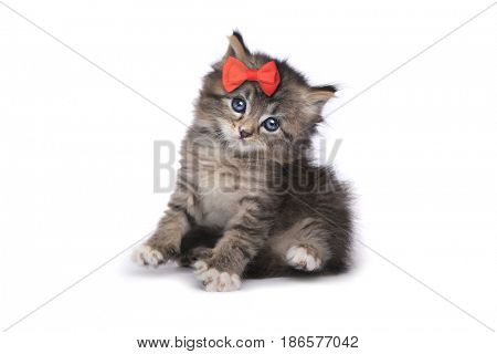 Sweet Tiny Kitten on a White Background
