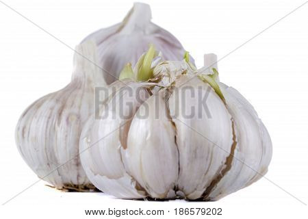 Ripe fresh garlic on white isolated background