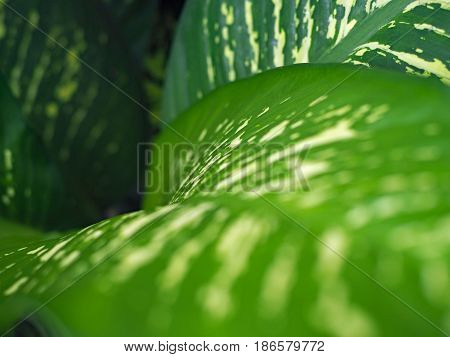 The beautiful green leaf in the garden.