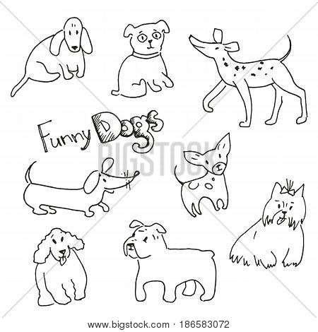 Vector hand drawn doodle collection of cute funny dogs. Different breeds, basset, Dalmatian, dachshund, pug, bulldog, spaniel. Naive minimalistic style