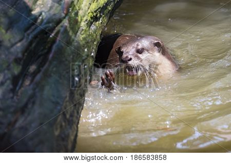 Image of an otters on the water. Wild Animals.