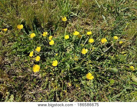 green plant with small yellow flowers in grass