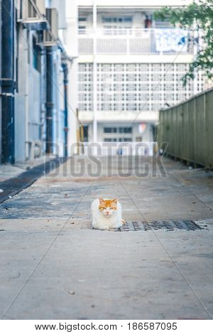 Cat in downtown alone, Hong Kong South